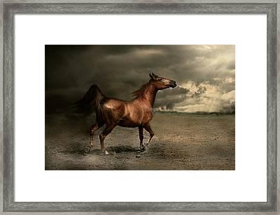 Free Spirit Framed Print by Dorota Kudyba