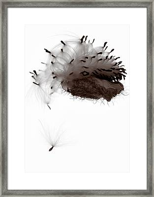 Freedom Framed Print by Dave Bowman