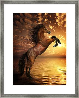 Freedom Framed Print by Shanina Conway