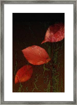 Freefall Framed Print by Bonnie Bruno