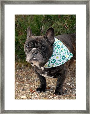 French Bulldog 96 Framed Print by Joyce StJames