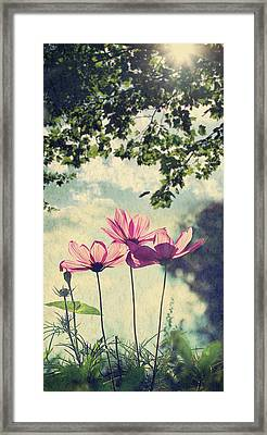French Wild Flowers Framed Print by Kelly Sillaste