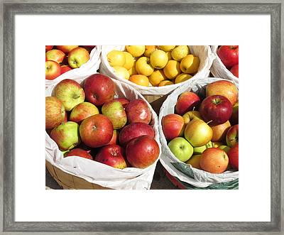 Fresh Apple Framed Print by Alfred Ng