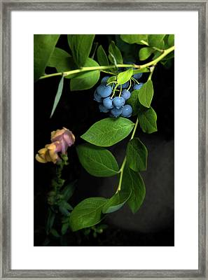 Fresh Blueberries Framed Print by K Powers Photography