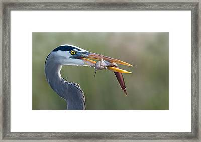 Fresh Catch Framed Print by Alfred Forns