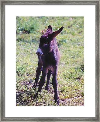 Fresh Legs Framed Print by Jan Amiss Photography