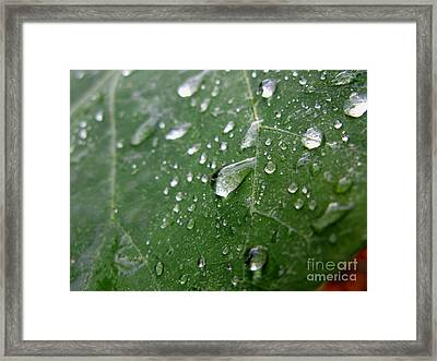 Fresh Framed Print by PJ  Cloud