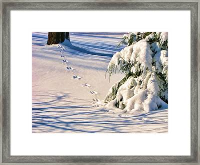 Fresh Snow Prints Framed Print by Christopher Arndt