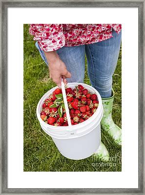 Fresh Strawberries Framed Print by Elena Elisseeva