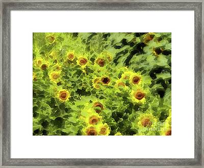 Fresh Sunflowers Framed Print by Methune Hively