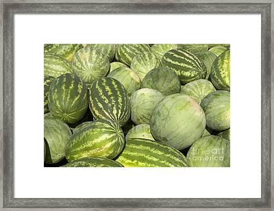 Freshly Harvested Watermelons Framed Print by Inga Spence