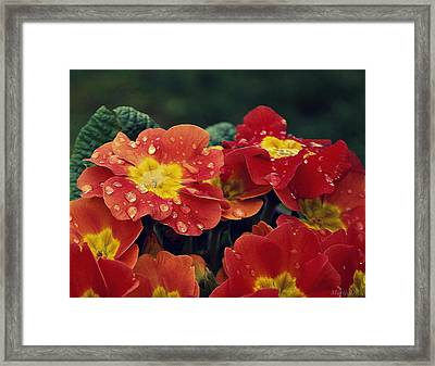 Freshness Framed Print by Marija Djedovic