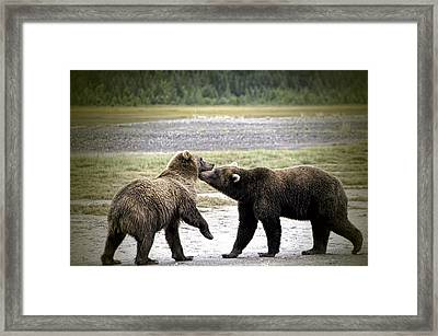Friend Or Foe Framed Print by Phyllis Taylor