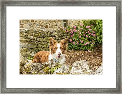 Friendly Dog In Garden Framed Print by Patricia Hofmeester