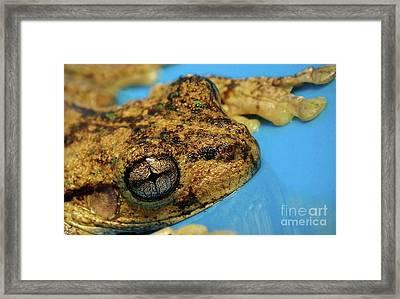 Friendly Frog Framed Print by Kaye Menner