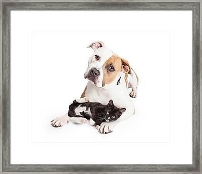 Friendly Pit Bull Dog And Affectionate Kitten Framed Print by Susan Schmitz
