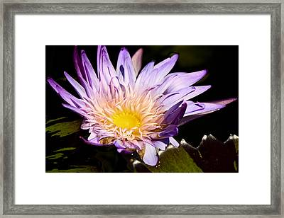 Frilly Lilly Framed Print by Teresa Mucha