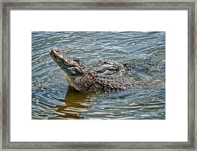Frisky In Florida Framed Print by Christopher Holmes