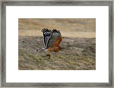 Frog On The Fly Framed Print by David Dunham