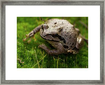Frog On The Grass Framed Print by Jean Noren
