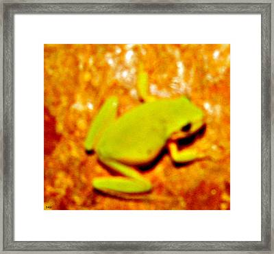 Frog On The Wall Framed Print by Debra     Vatalaro