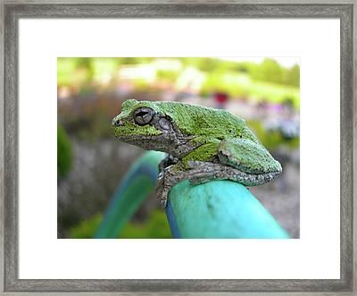 Frog Watering Plants Framed Print by Randy Rosenberger