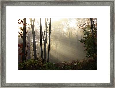 From Above Framed Print by Karol Livote