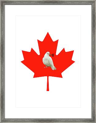 From Canada With Love Framed Print by Munir Alawi