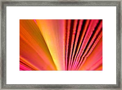 Fron Fan Unfolding Framed Print by Gwyn Newcombe