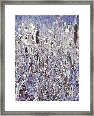 Frosted Cattails In The Morning Light Framed Print by Joy Nichols