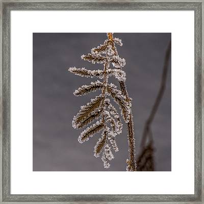 Frosted Fern Framed Print by Paul Freidlund