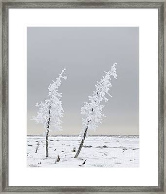 Frosted Twins Framed Print by Tim Grams