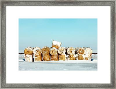Frosted Wheats Framed Print by Todd Klassy