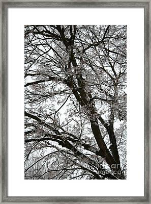 Frosty Tree Limbs Framed Print by Carol Groenen