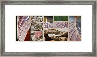 Frozen Dew Framed Print by Lisa Knechtel