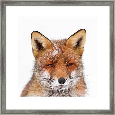 Frozen Fox Framed Print by Roeselien Raimond