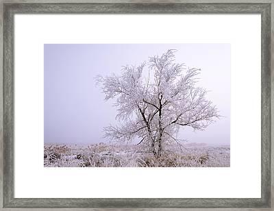 Frozen Ground Framed Print by Chad Dutson