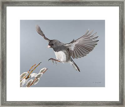 Frozen In Time Framed Print by Gerry Sibell