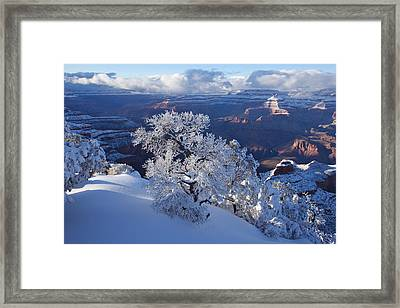 Winter Wonder Framed Print by Mike Buchheit
