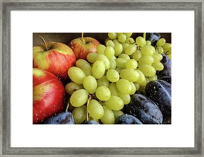 Still Life Of Fruit Assortment Framed Print by Elena Ivanova