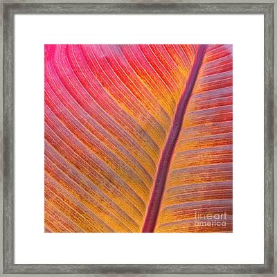 Fuchsia Flow Framed Print by Marilyn Cornwell