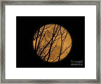 Full Moon Through The Branches Framed Print by Zina Stromberg