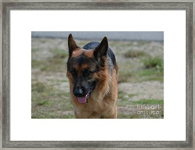 Fun German Shepherd Dog Framed Print by DejaVu Designs