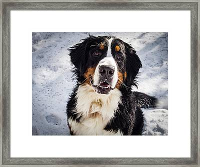 Fun In The Snow Framed Print by Jean Noren