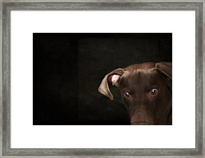 Funny Dog 1 Framed Print by Heike Hultsch