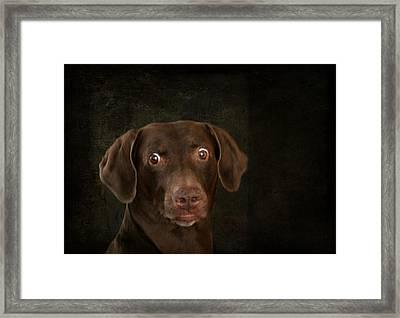 Funny Dog 4 Framed Print by Heike Hultsch