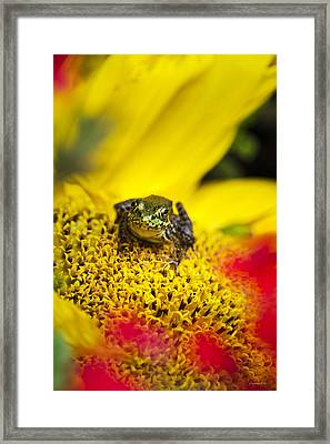 Funny Frog On A Sunflower Framed Print by Christina Rollo