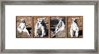 Funny Lemurs Framed Print by Svetlana Sewell