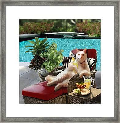 Funny Pet  Vacationing Kitty Framed Print by Gina Femrite
