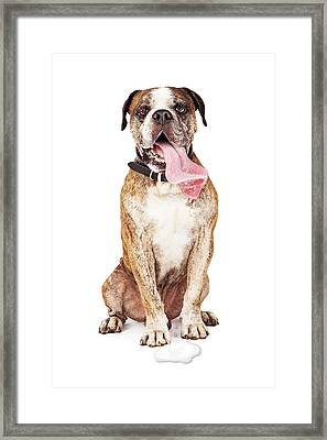 Funny Thirsty Hot Dog Drooling Framed Print by Susan Schmitz